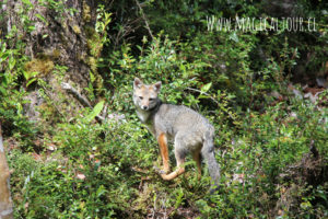 parte de la biodiversidad del parque nacional